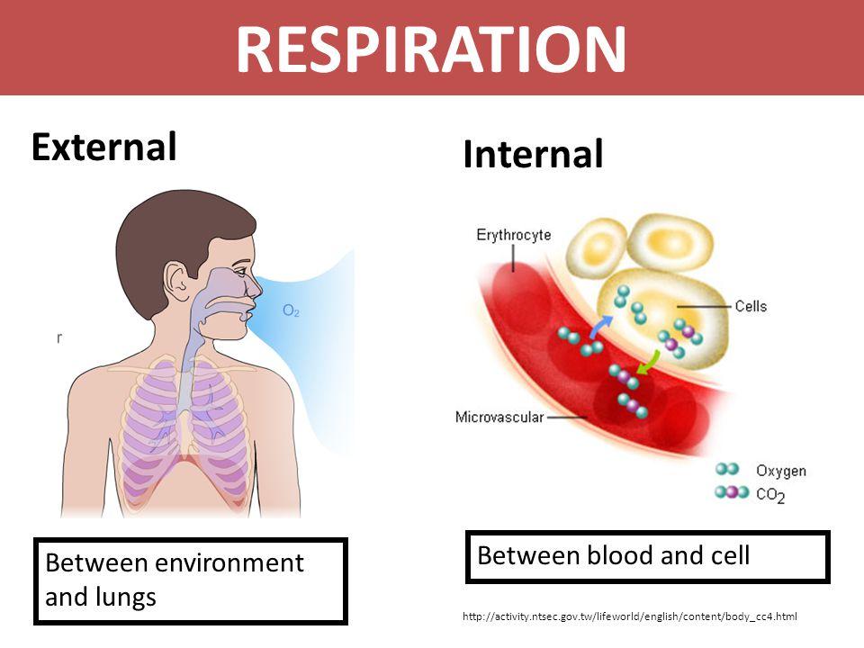 RESPIRATION External Internal Between blood and cell