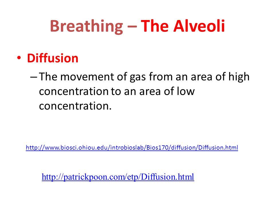 Breathing – The Alveoli
