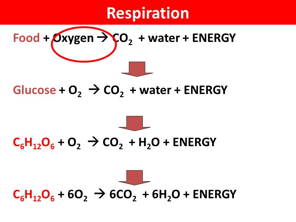 Respiration Food + Oxygen  CO2 + water + ENERGY