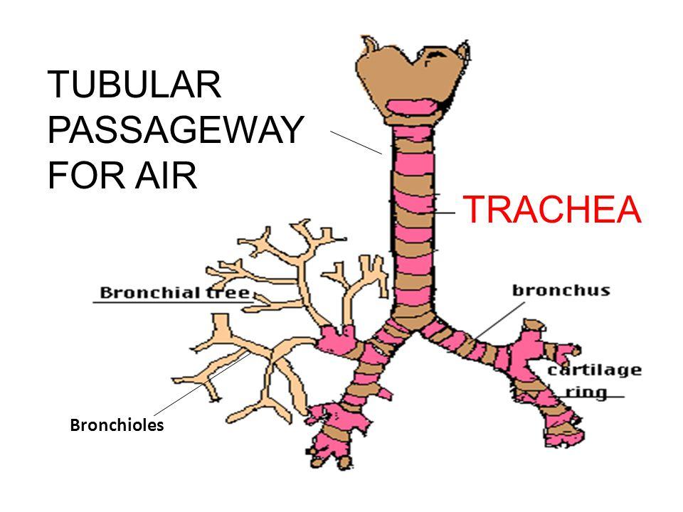 TUBULAR PASSAGEWAY FOR AIR