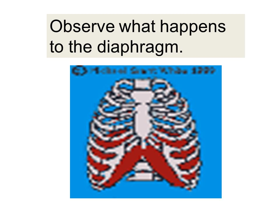 Observe what happens to the diaphragm.