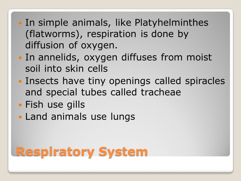 In simple animals, like Platyhelminthes (flatworms), respiration is done by diffusion of oxygen.