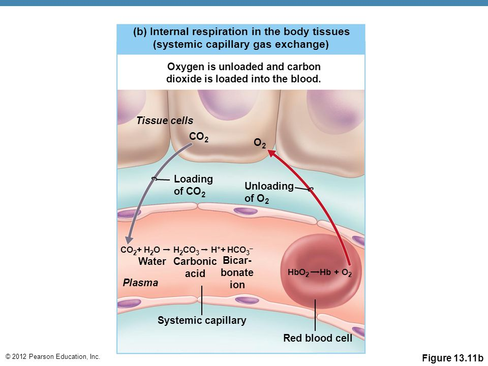 Oxygen is unloaded and carbon dioxide is loaded into the blood.