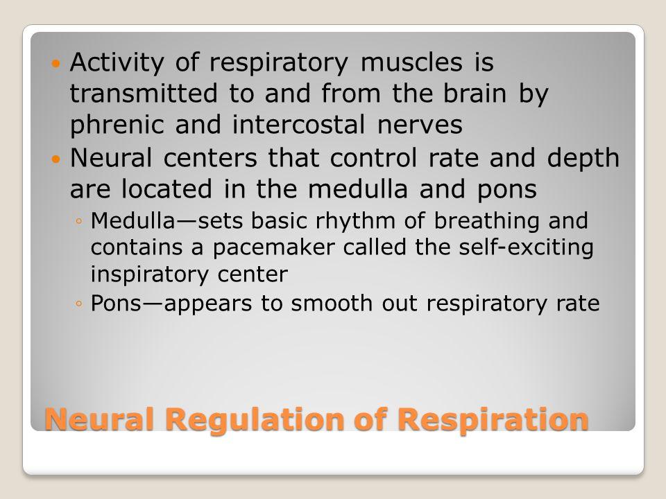 Neural Regulation of Respiration