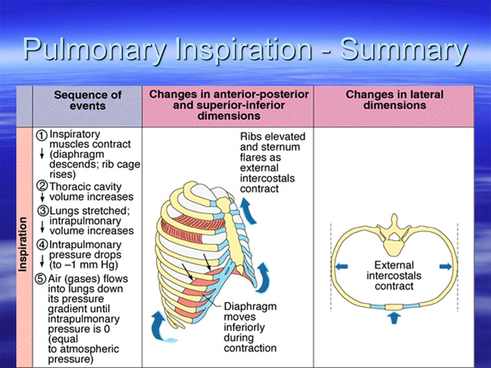 Pulmonary Inspiration - Summary