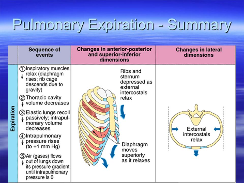Pulmonary Expiration - Summary