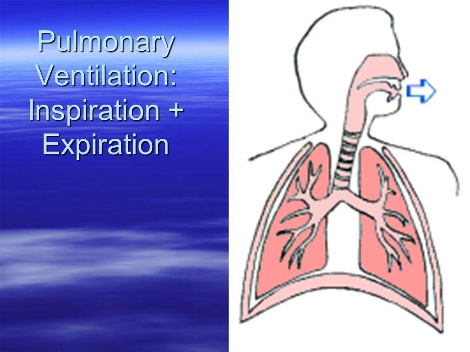 Pulmonary Ventilation: Inspiration + Expiration