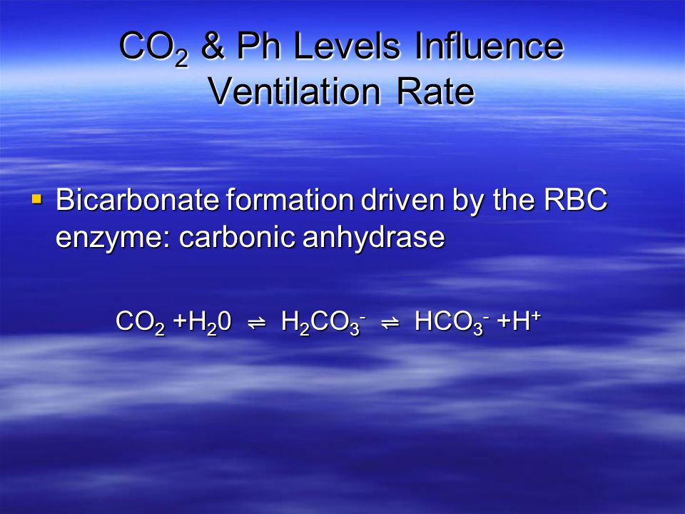 CO2 & Ph Levels Influence Ventilation Rate