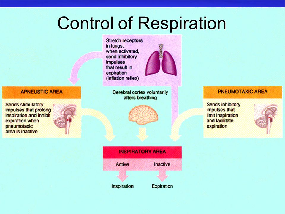 lung functions and control of breathing We rarely think about breathing unless we're out of breath the act of breathing is part of the respiratory system, a complex process where air travels into and out of the lungs.
