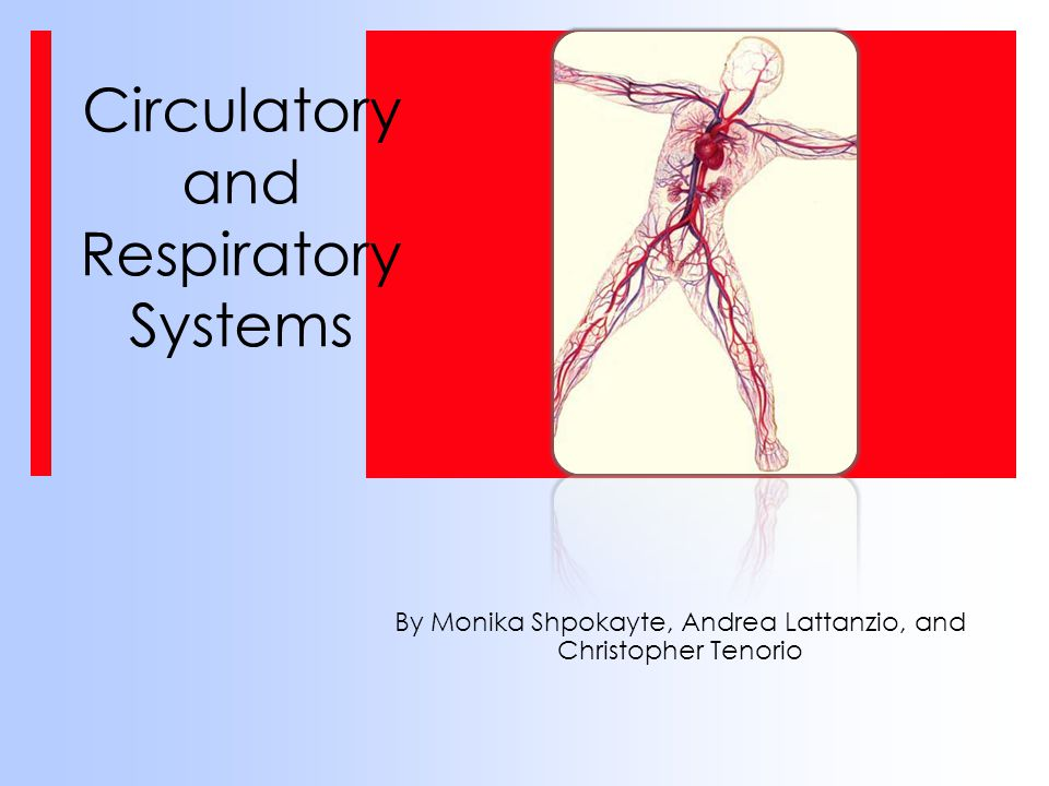 Circulatory and Respiratory Systems