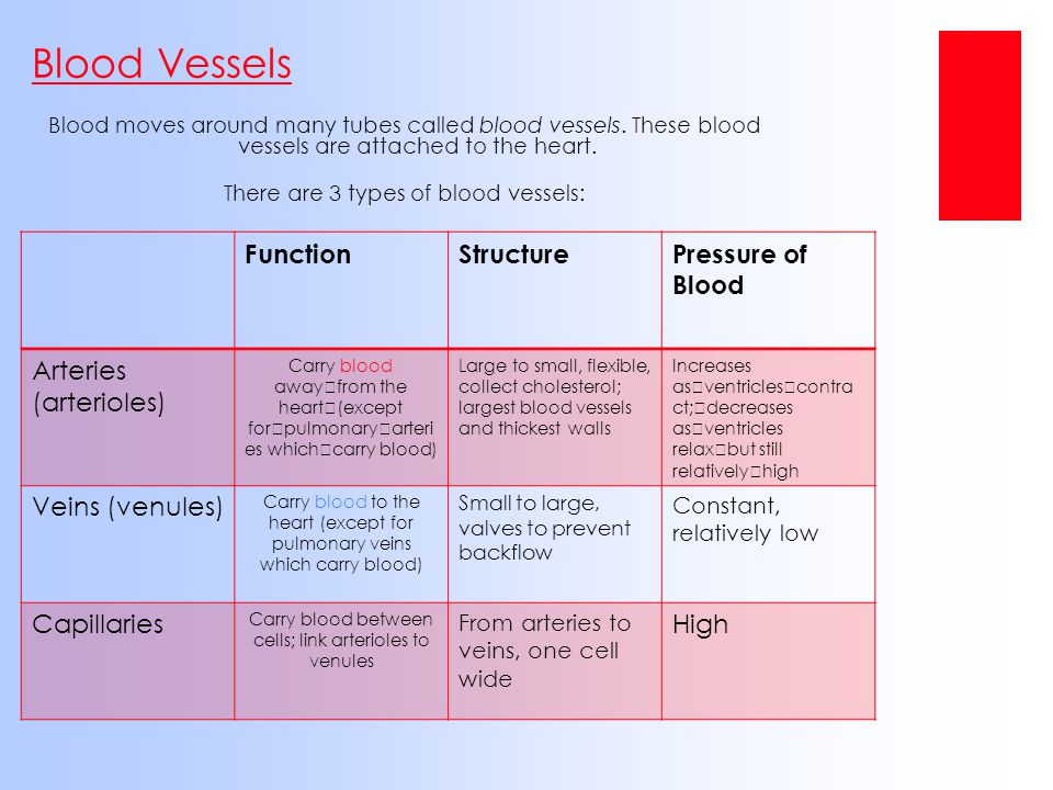 Carry blood between cells; link arterioles to venules