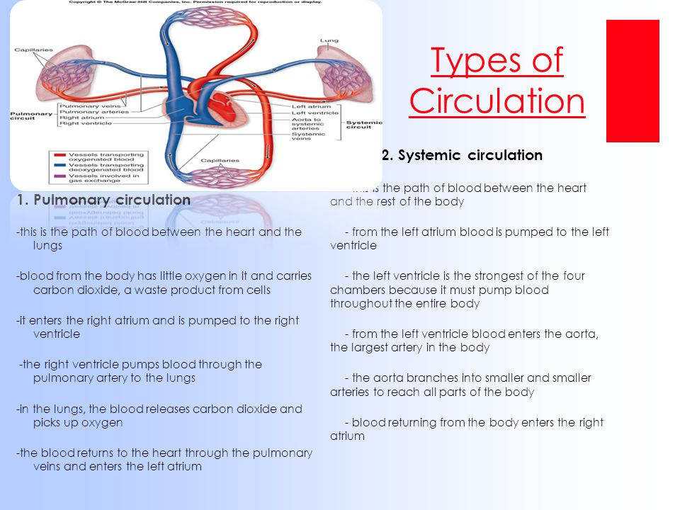 Types of Circulation 2. Systemic circulation 1. Pulmonary circulation