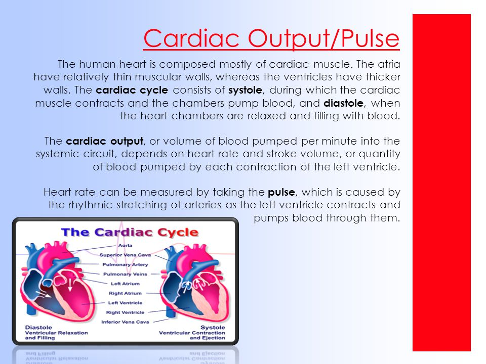 Cardiac Output/Pulse