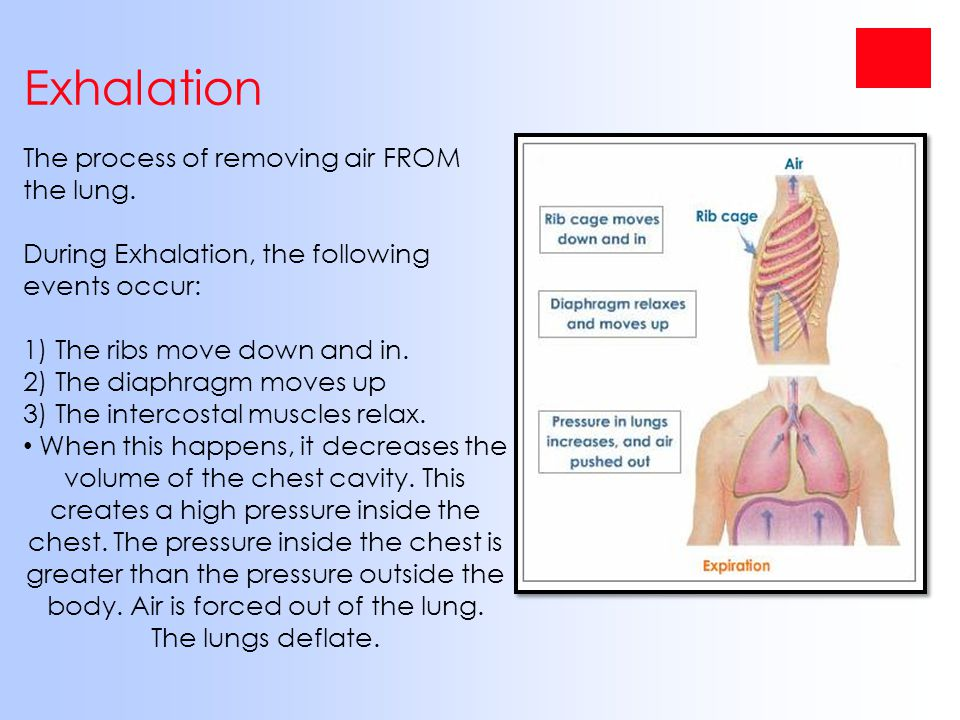 Exhalation The process of removing air FROM the lung.