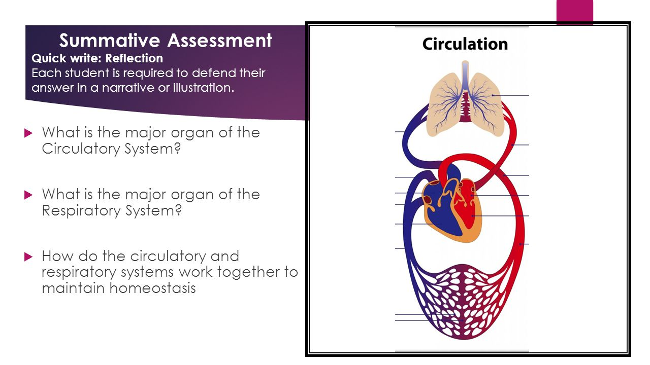 cardiovascular system an essential part of Evaluation of the equine cardiovascular system is an essential part of a physical examination, an examination for insurance purposes, or an examination of the horse prior to purchase.