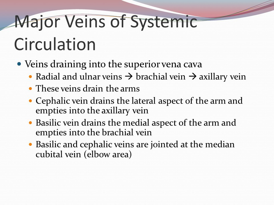 exercise 21: anatomy of blood vessels - ppt download, Cephalic Vein