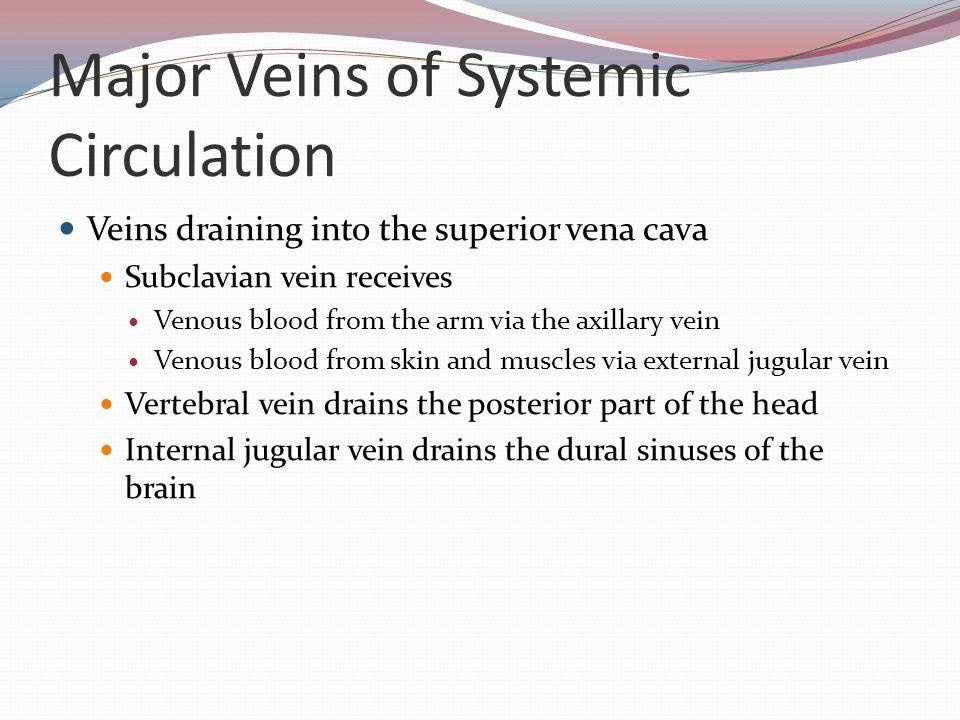 Major Veins of Systemic Circulation