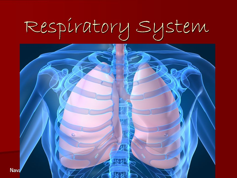 Respiratory System Navasota Junior High