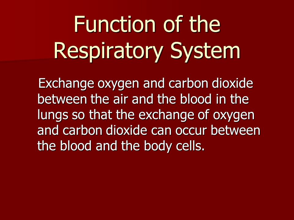 Function of the Respiratory System