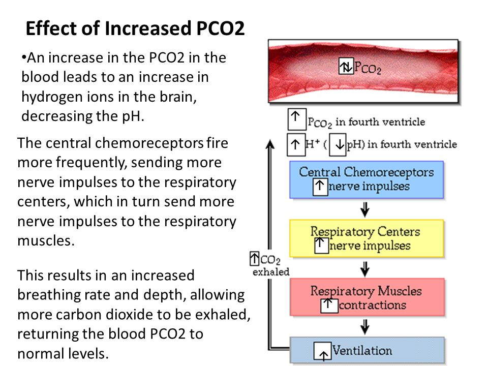 Effect of Increased PCO2