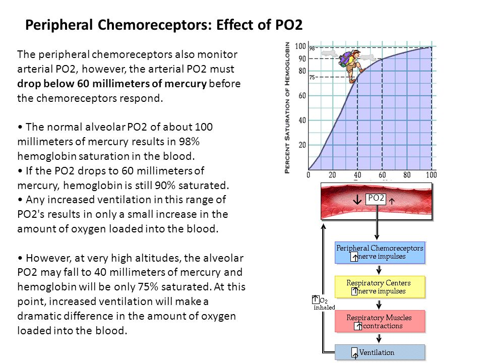 Peripheral Chemoreceptors: Effect of PO2