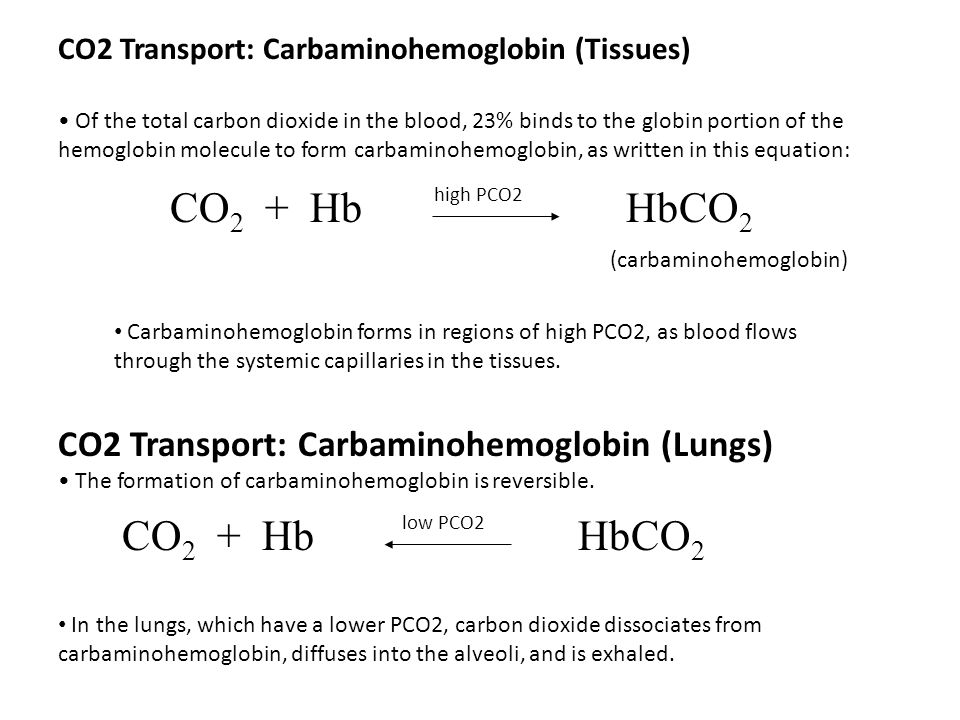 CO2 Transport: Carbaminohemoglobin (Tissues)