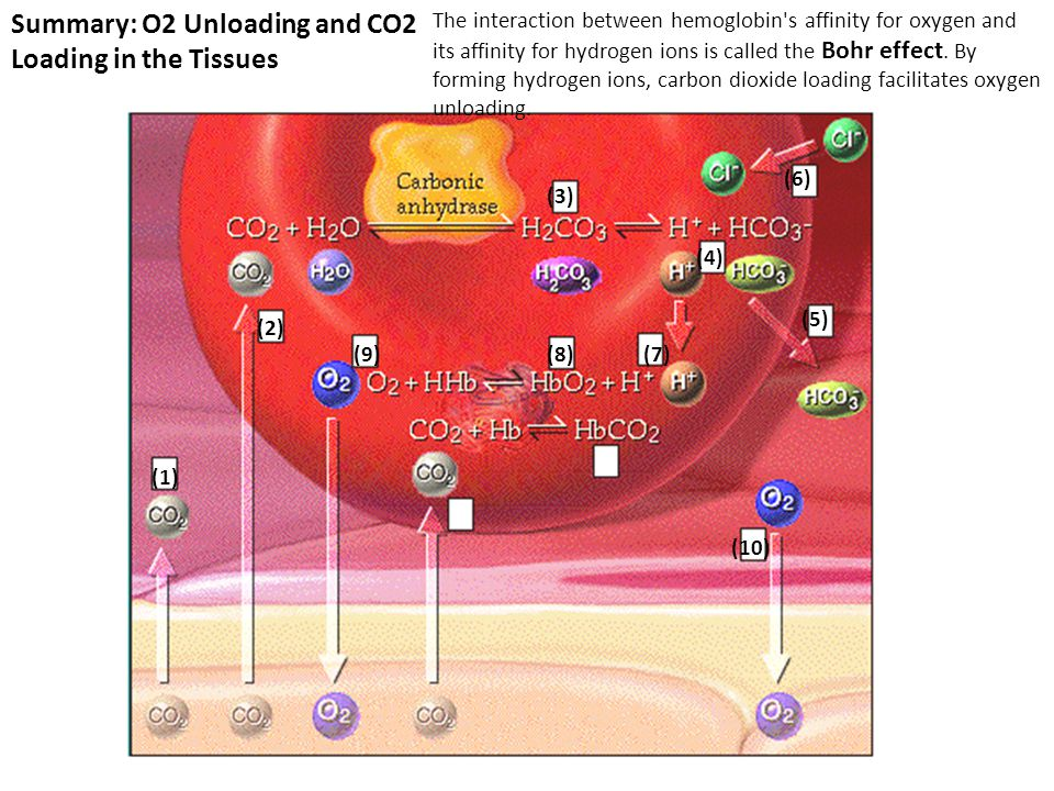 Summary: O2 Unloading and CO2 Loading in the Tissues