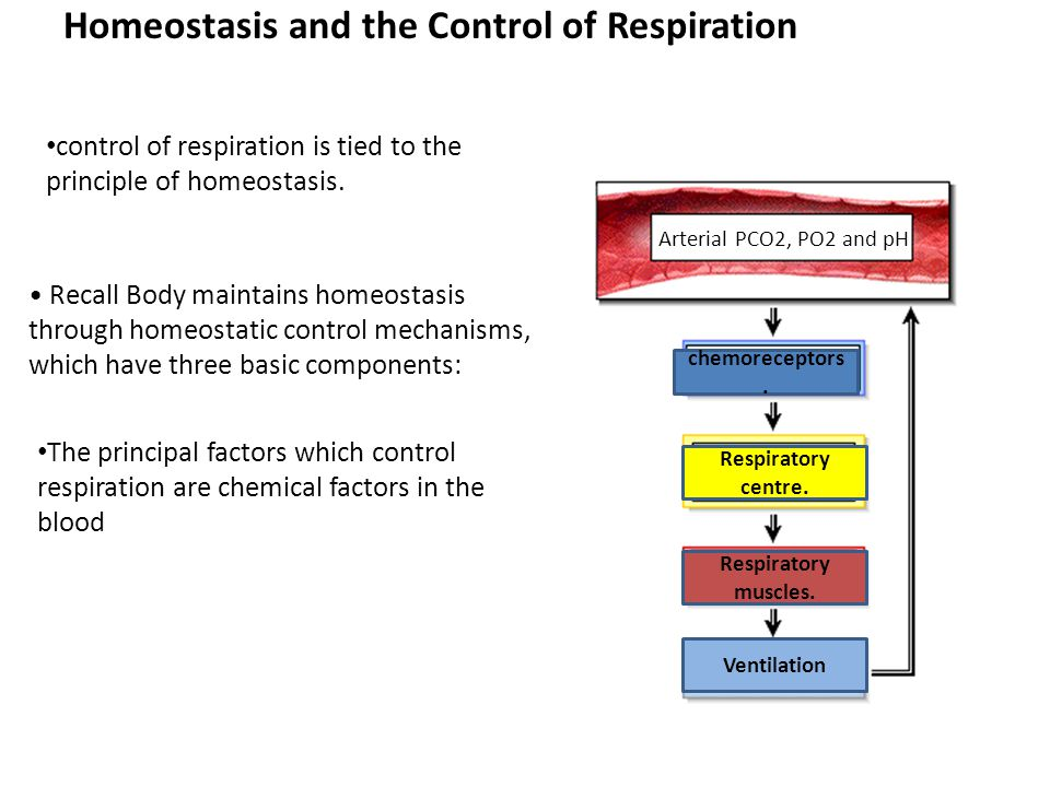 Homeostasis and the Control of Respiration