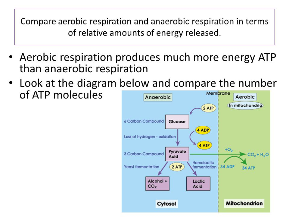Look at the diagram below and compare the number of ATP molecules