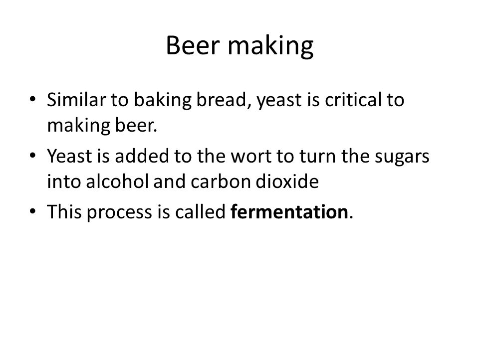 Beer making Similar to baking bread, yeast is critical to making beer.