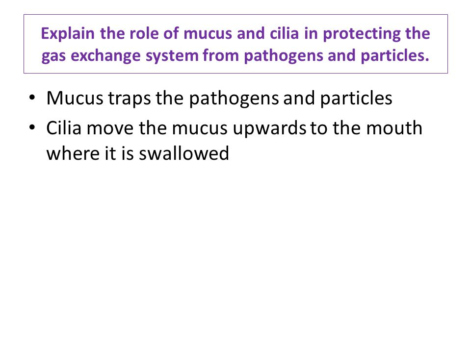 Mucus traps the pathogens and particles