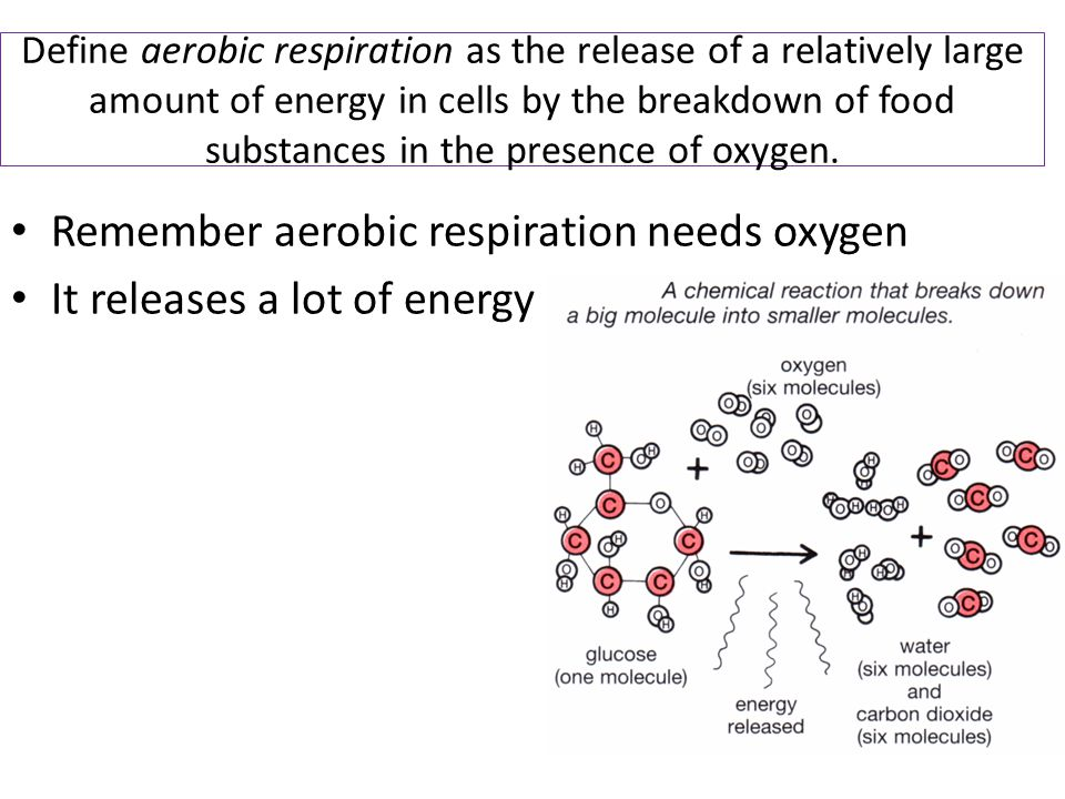 Remember aerobic respiration needs oxygen It releases a lot of energy