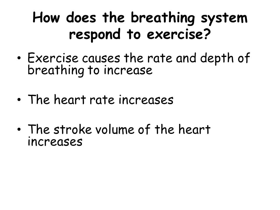 How does the breathing system respond to exercise