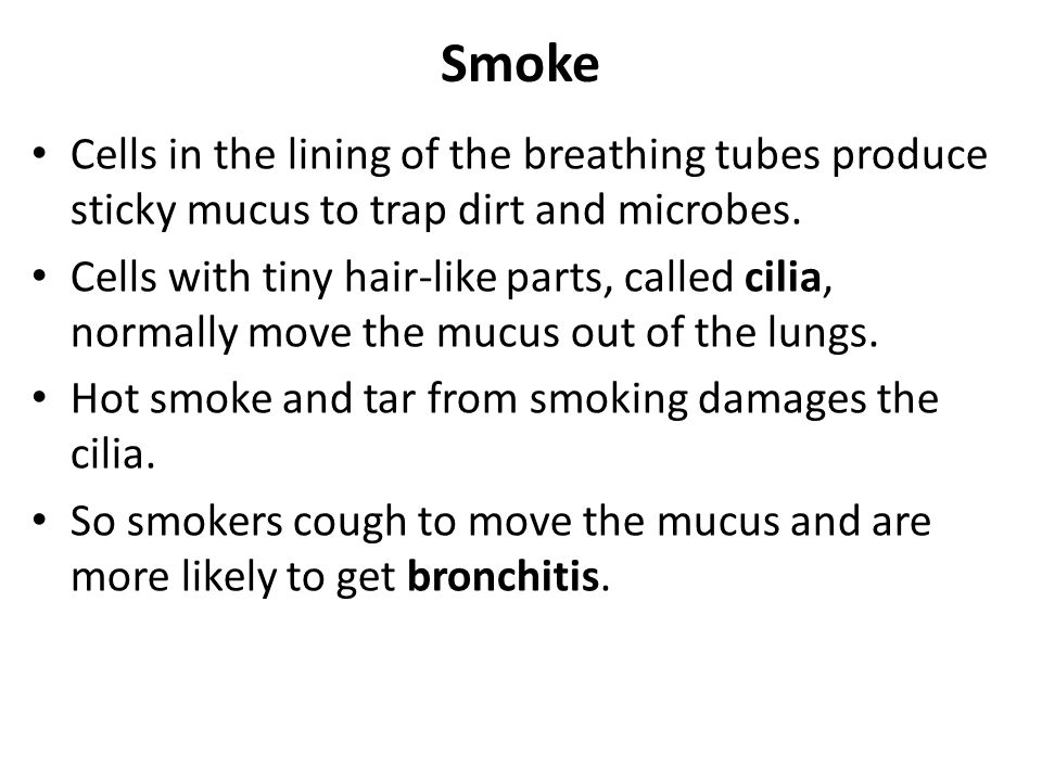 Smoke Cells in the lining of the breathing tubes produce sticky mucus to trap dirt and microbes.