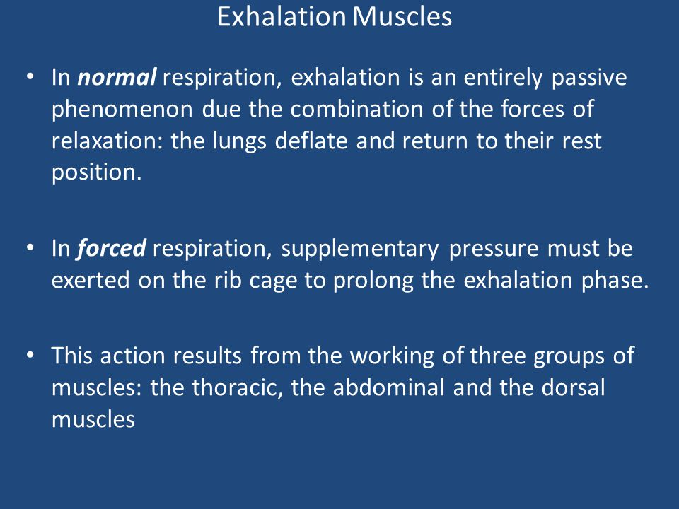 Exhalation Muscles