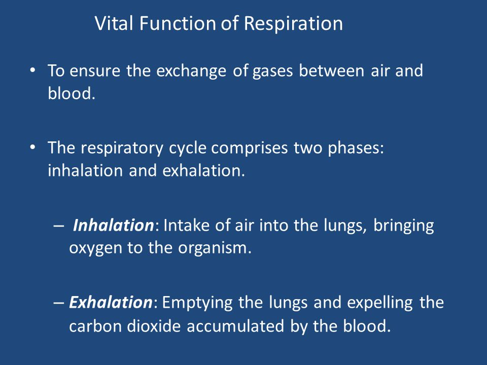 Vital Function of Respiration