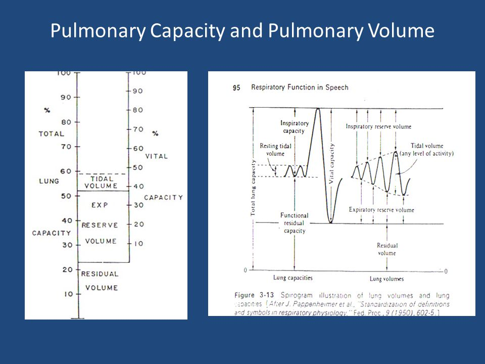 Pulmonary Capacity and Pulmonary Volume