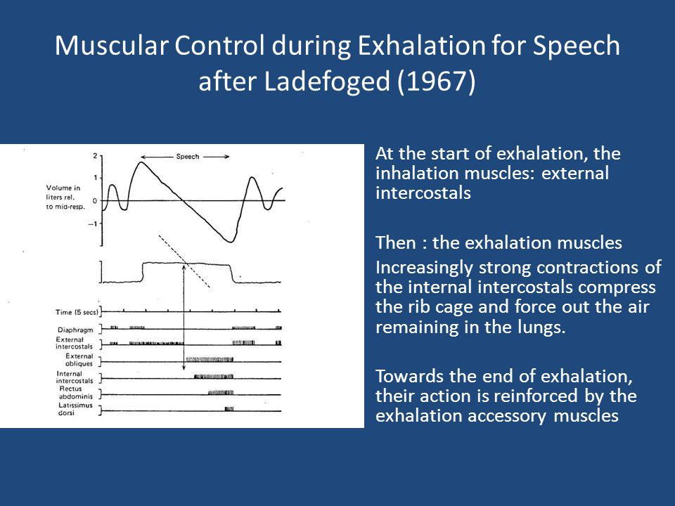 Muscular Control during Exhalation for Speech after Ladefoged (1967)