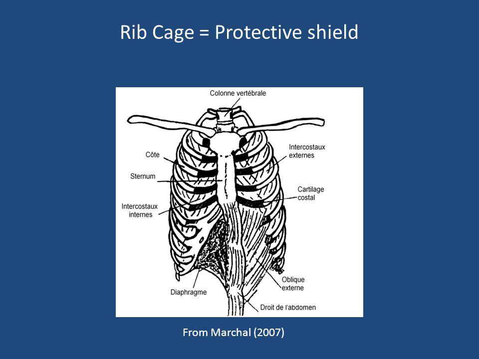 Rib Cage = Protective shield