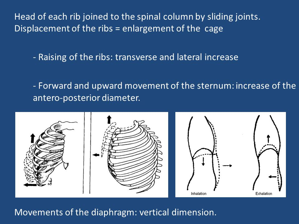 - Raising of the ribs: transverse and lateral increase