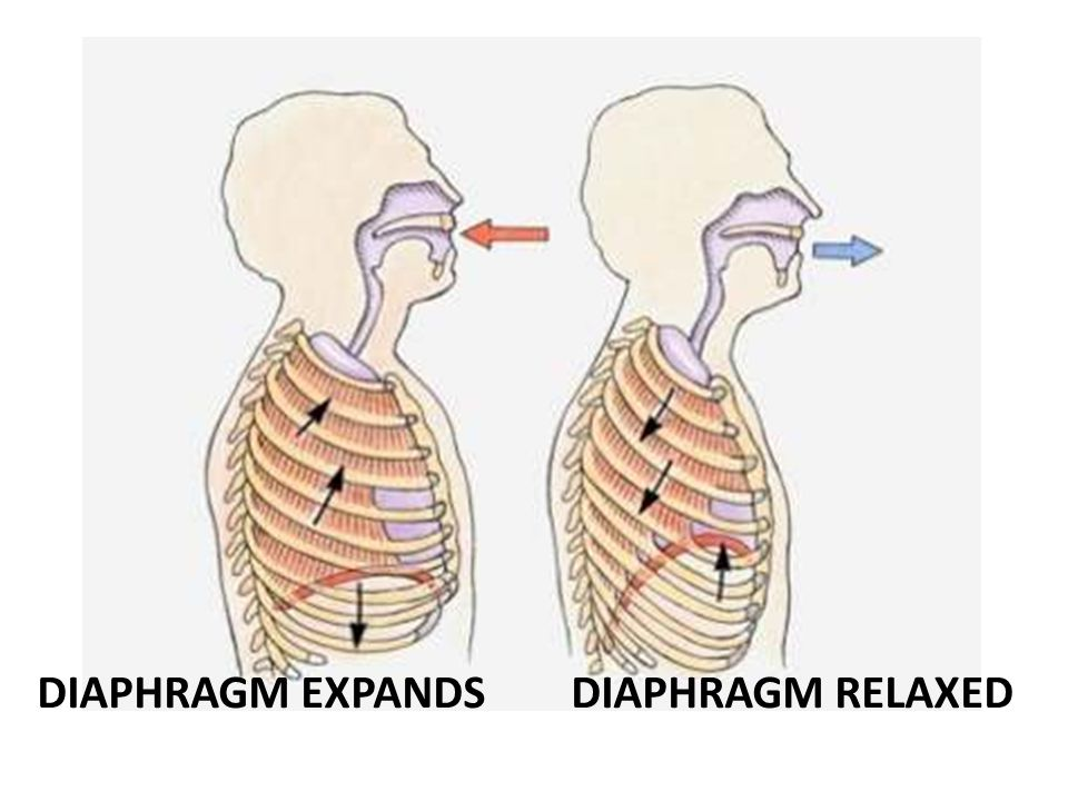 DIAPHRAGM EXPANDS DIAPHRAGM RELAXED
