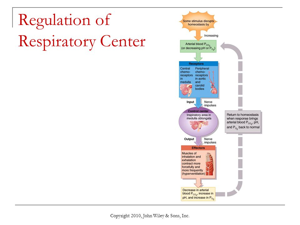Regulation of Respiratory Center