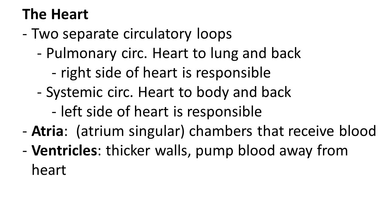 The Heart Two separate circulatory loops. Pulmonary circ. Heart to lung and back. right side of heart is responsible.
