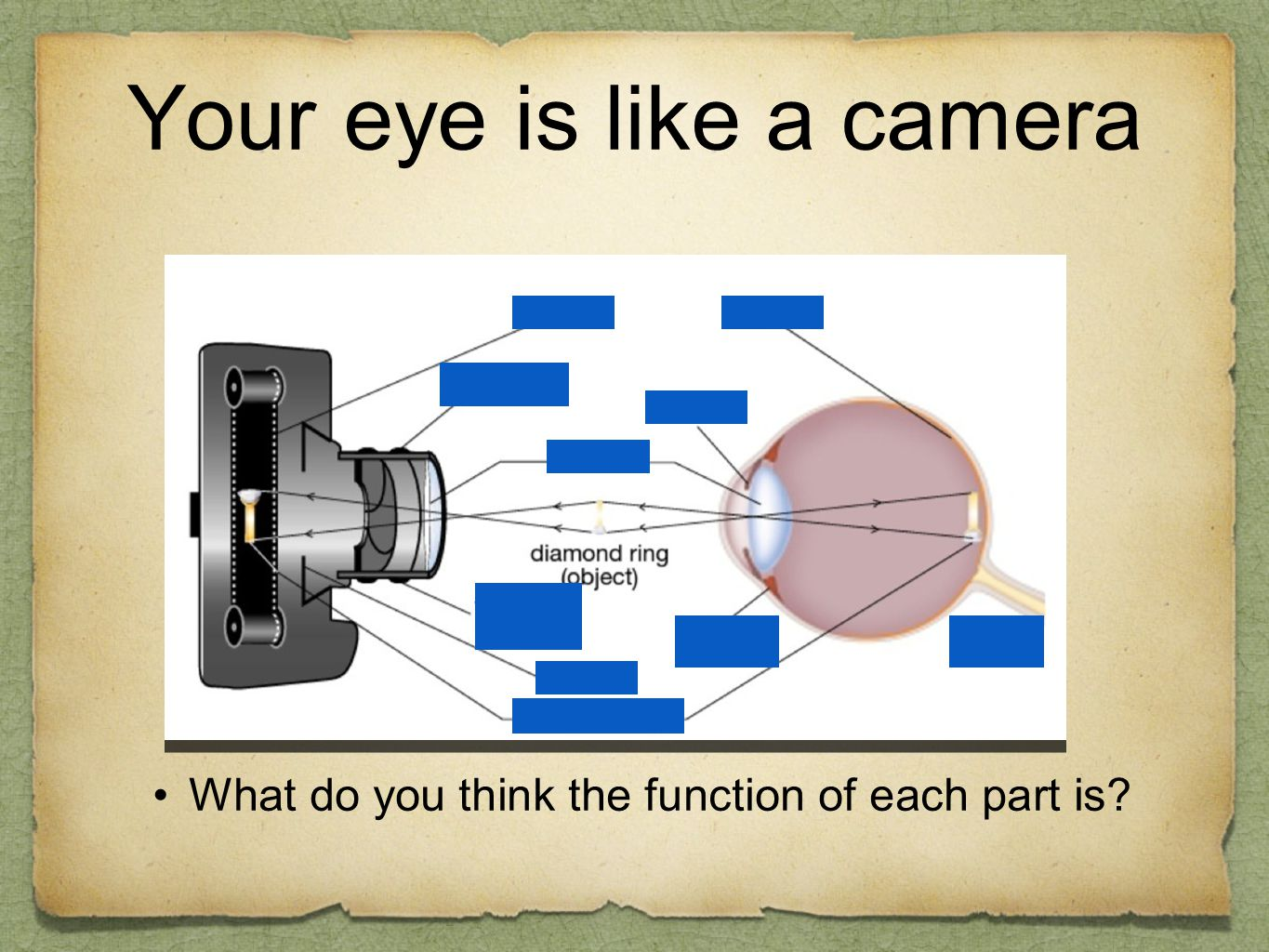 Your eye is like a camera