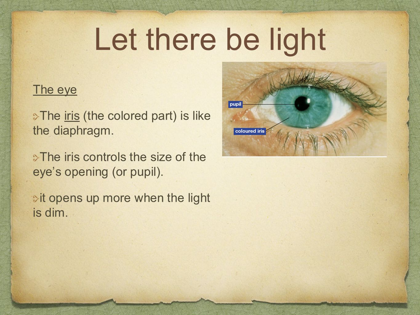 Let there be light The eye