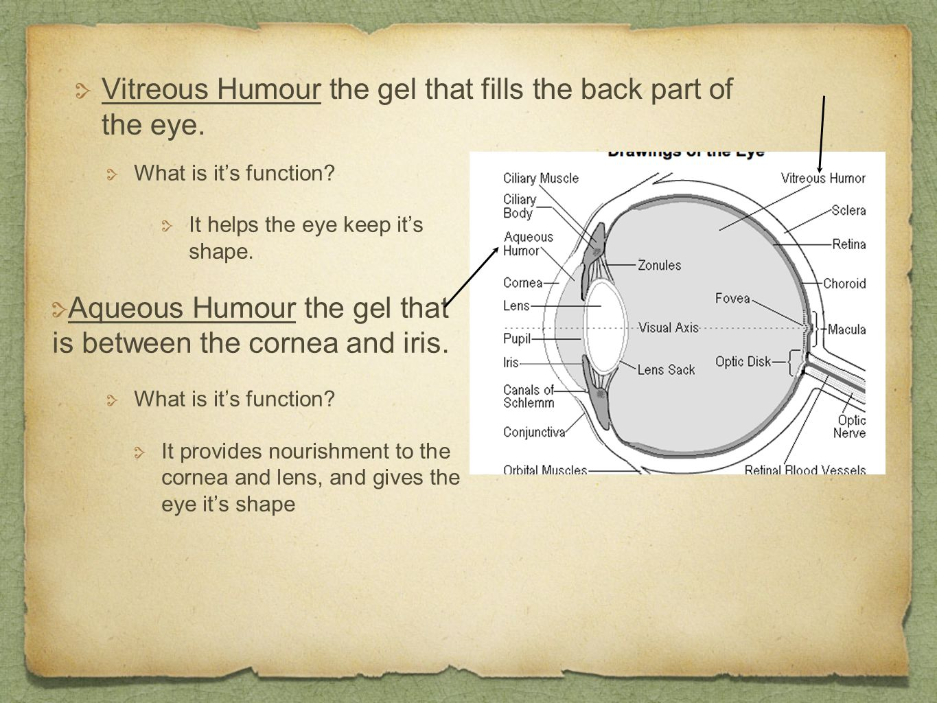 Vitreous Humour the gel that fills the back part of the eye.