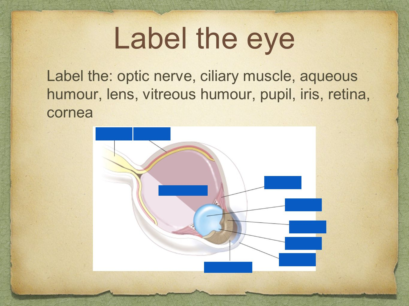 Label the eye Label the: optic nerve, ciliary muscle, aqueous humour, lens, vitreous humour, pupil, iris, retina, cornea.