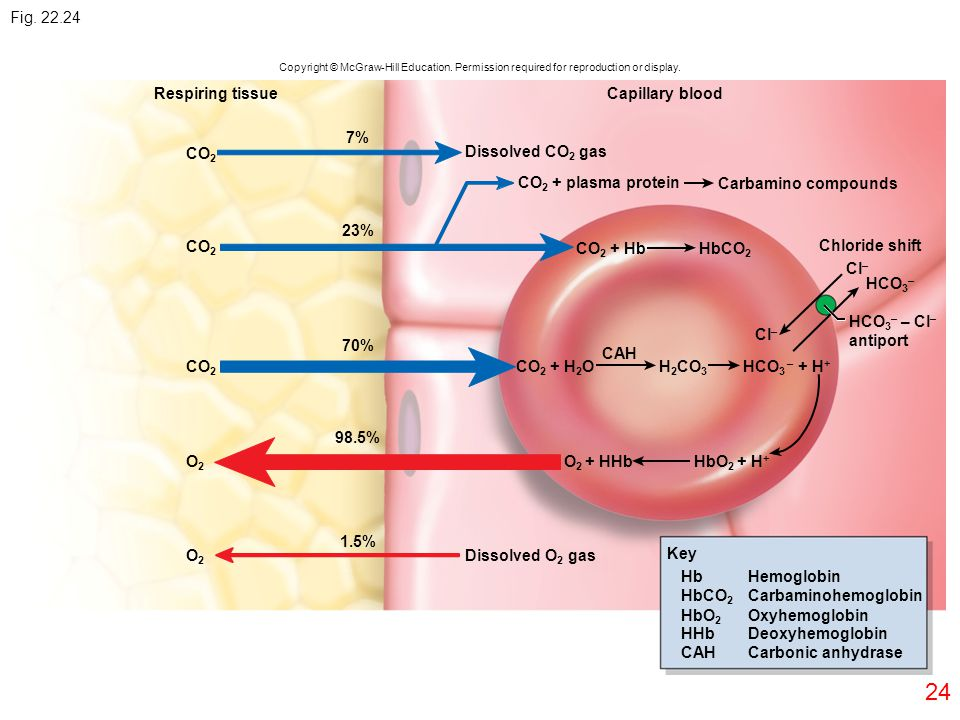 Fig. 22.24 Respiring tissue Capillary blood 7% CO2 Dissolved CO2 gas