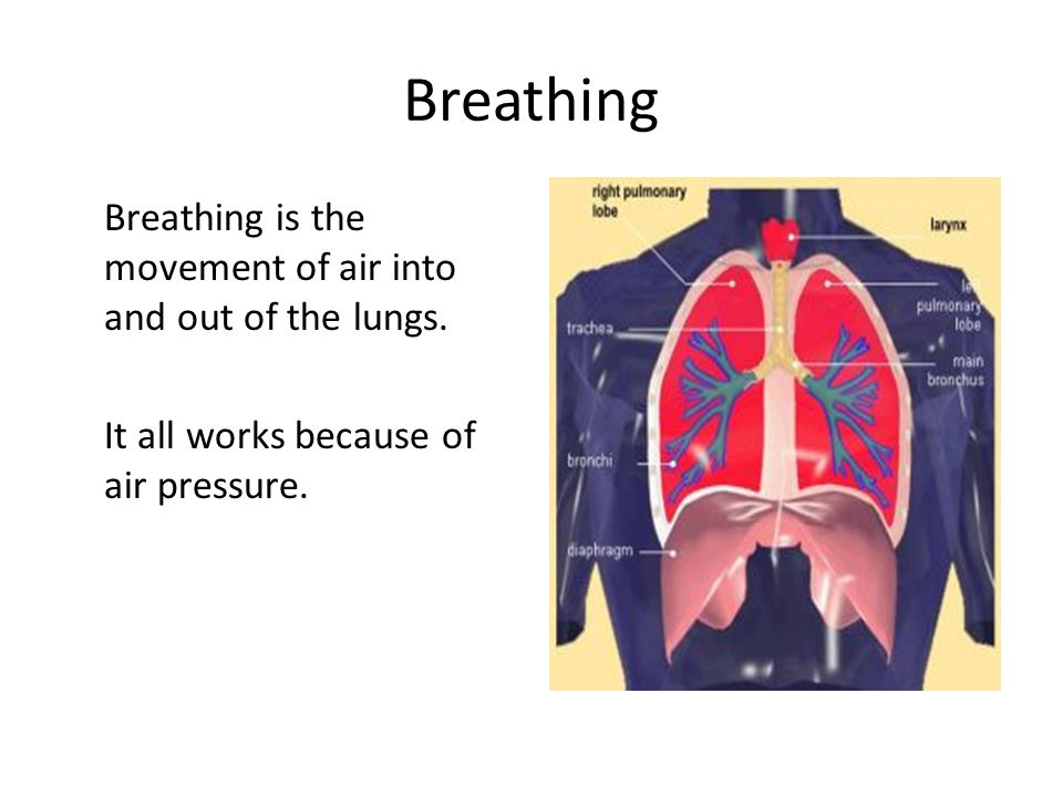 Breathing Breathing is the movement of air into and out of the lungs.