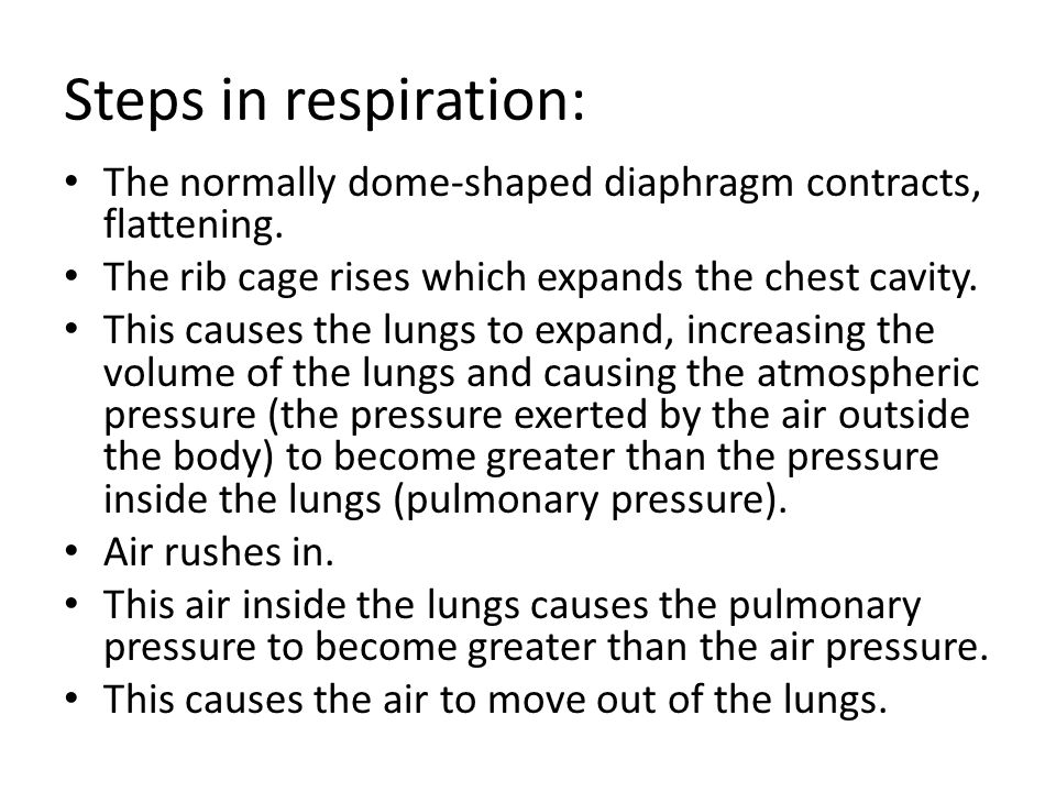 Steps in respiration: The normally dome-shaped diaphragm contracts, flattening. The rib cage rises which expands the chest cavity.